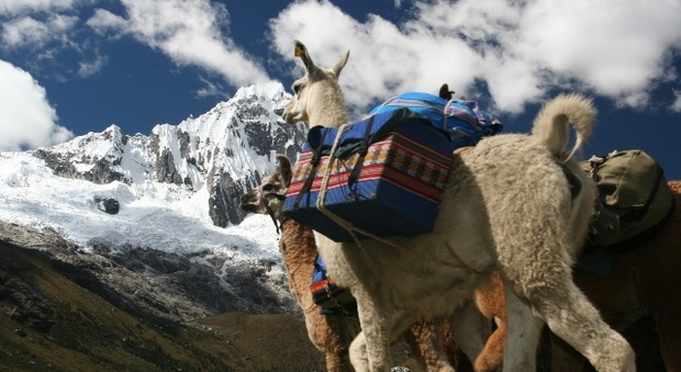 Llama Trek in Perù (foto di Perù Travel)